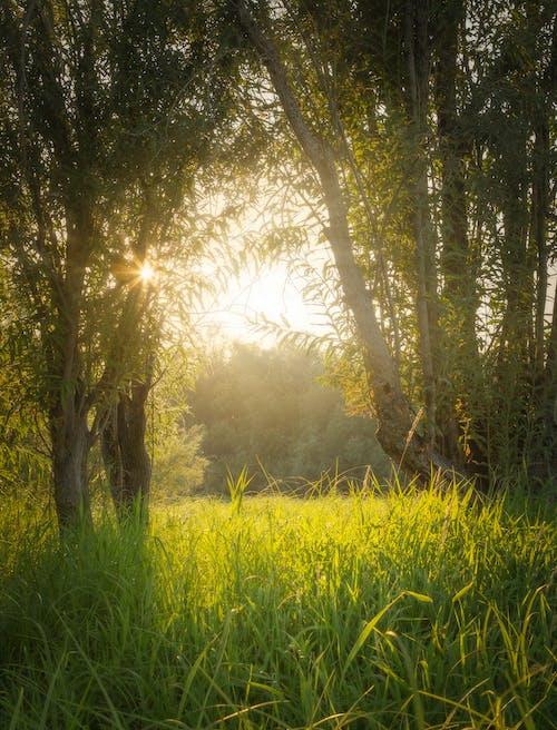 垂直ショット, 太陽の光, 屋外の無料の写真素材