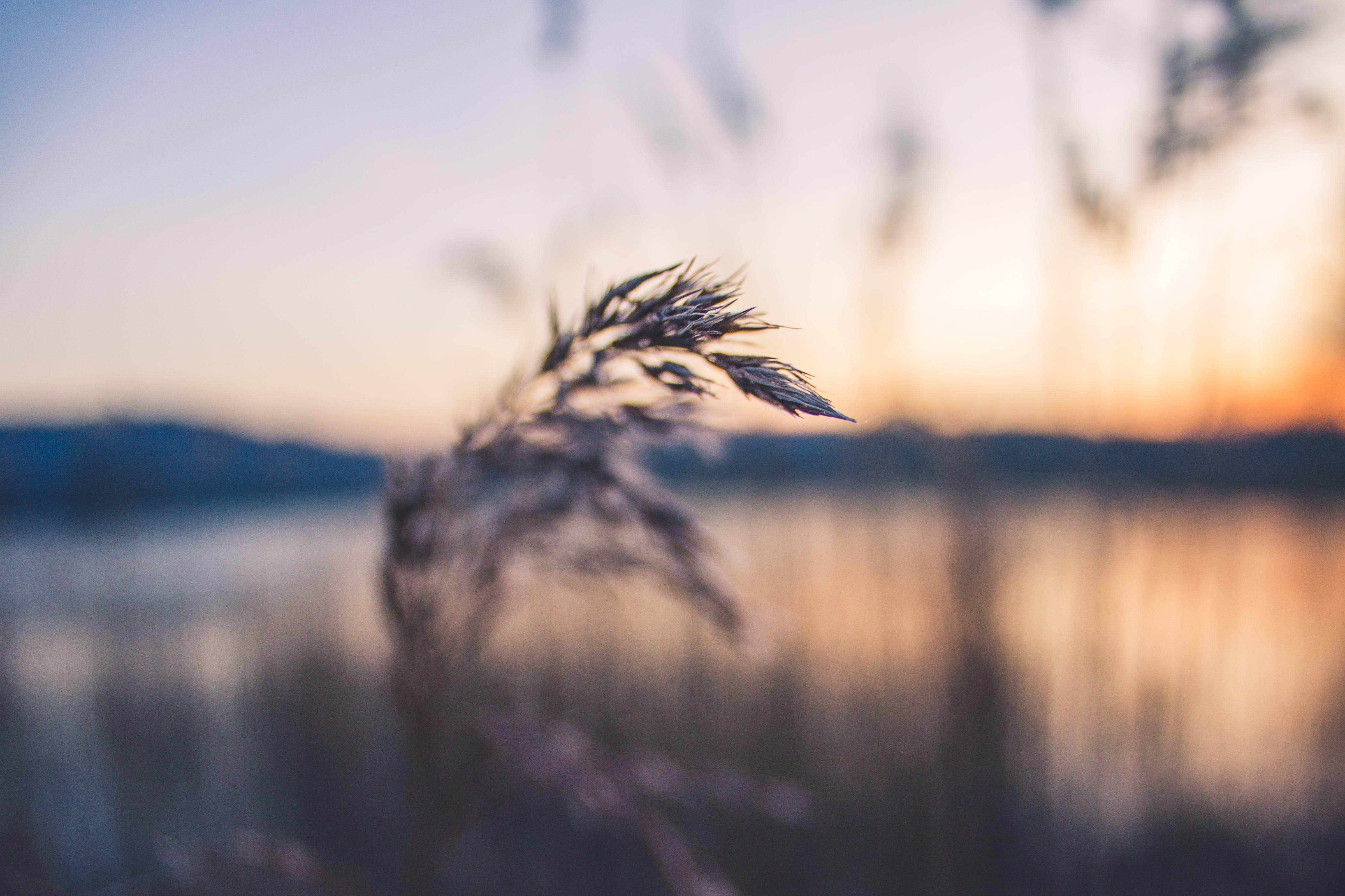 Kostenloses Stock Foto zu gras, makro, pflanze