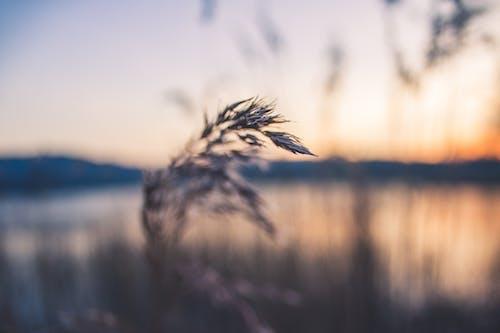 매크로, 식물, 잔디, 흐릿한의 무료 스톡 사진