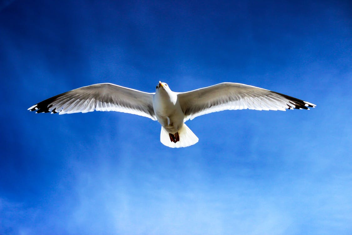 White Seagull Flying on Sky
