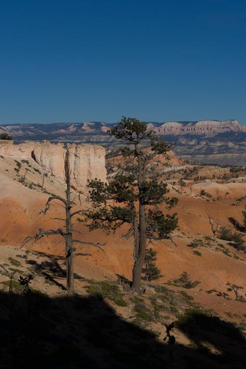 Trees on Brown Desert Under the Blue Sky