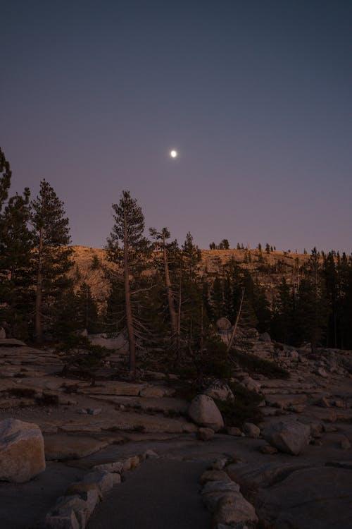 Imagine de stoc gratuită din albastru, arbori, brun