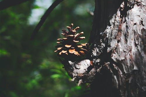 Partes De árboles Grises Y Grises