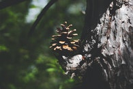 nature, tree, pine cone