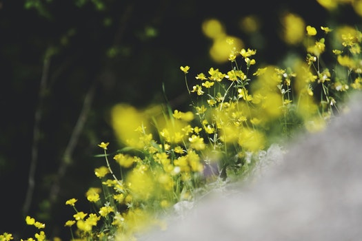 Yellow Flowers in Tilt Shift Lens Photography
