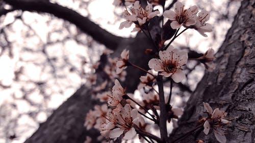 ağaçlar, bitki örtüsü, Çiçekler, doğa içeren Ücretsiz stok fotoğraf