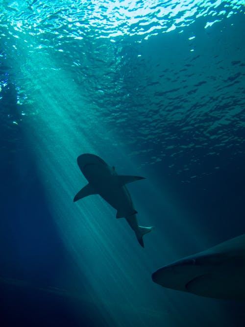 Underwater Photography of Sharks