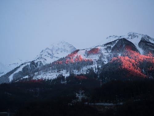 Δωρεάν στοκ φωτογραφιών με βουνά, δέντρα, κρύο