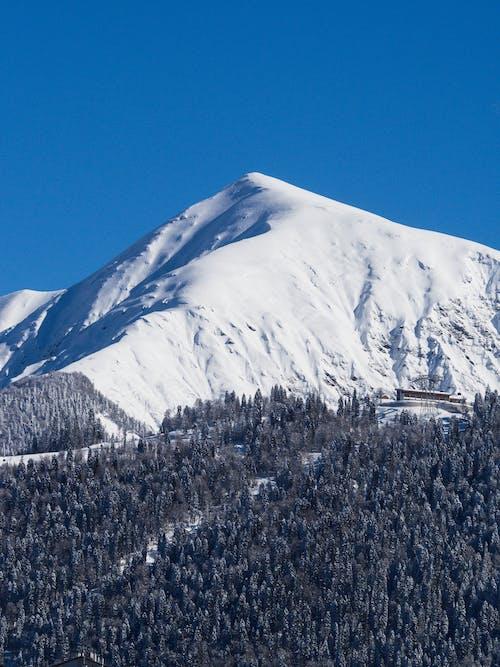 Darmowe zdjęcie z galerii z góra, krajobraz, las