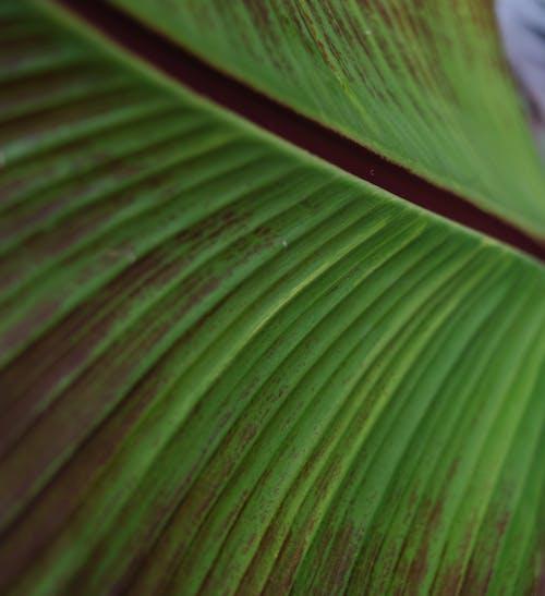 Kostnadsfri bild av abstrakt, banan, blad