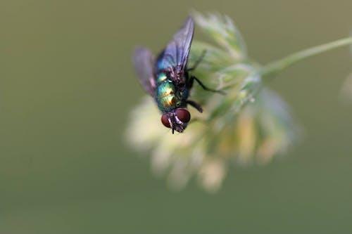 Základová fotografie zdarma na téma hmyz, zblízka