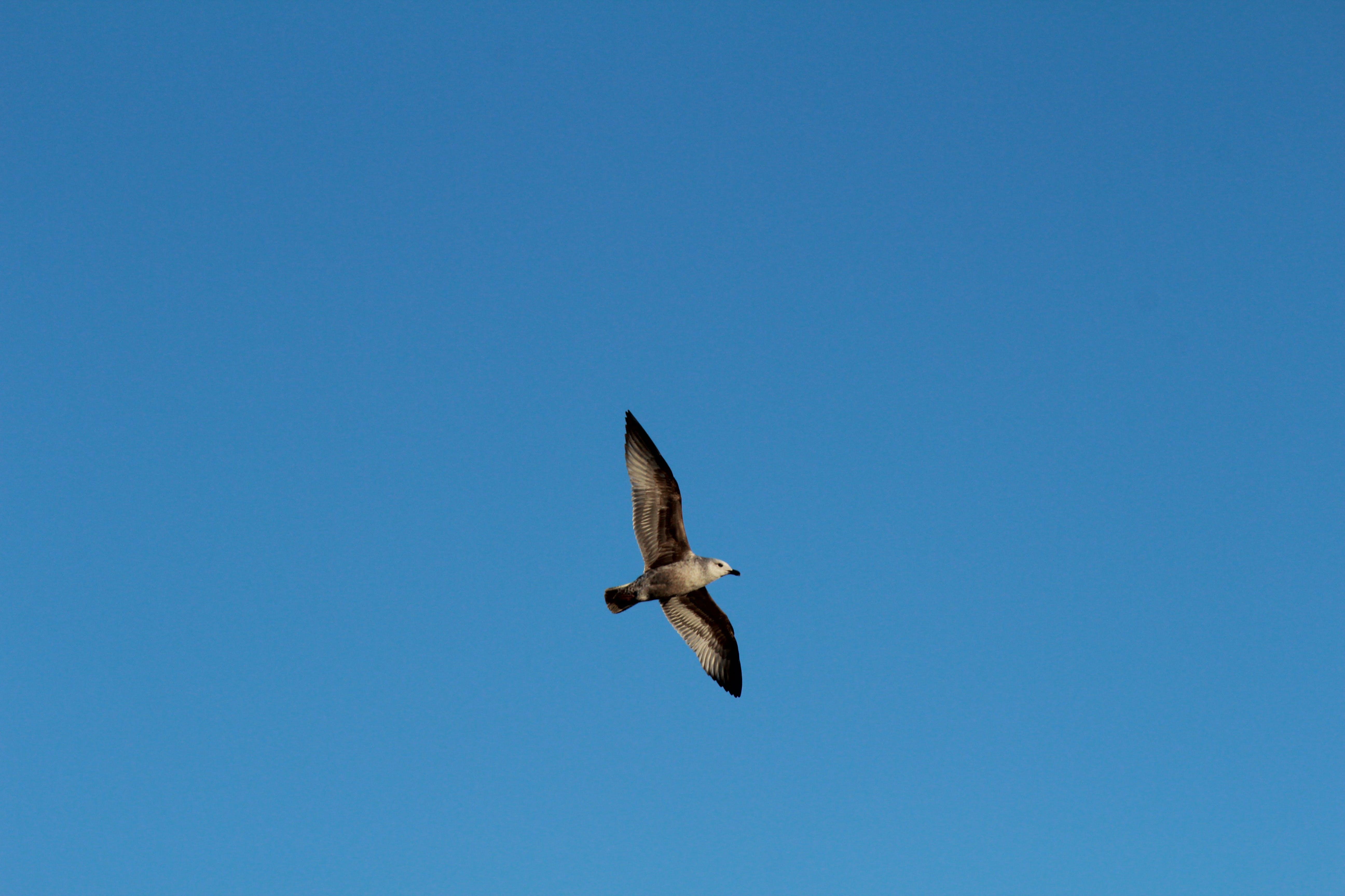 フライト, 動物, 日光, 空の無料の写真素材