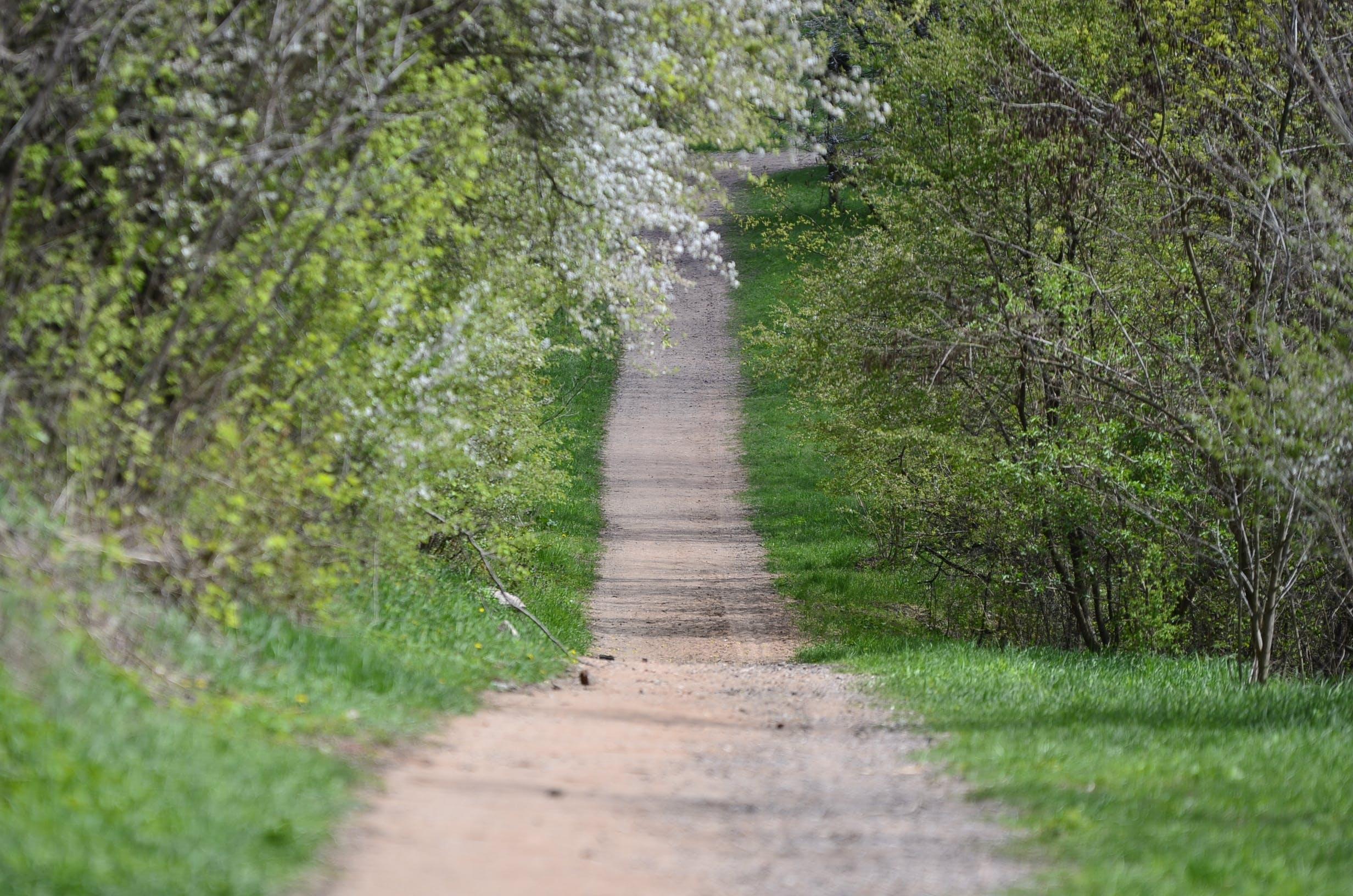 Free stock photo of Konrad Ciężki, meadow, path, road