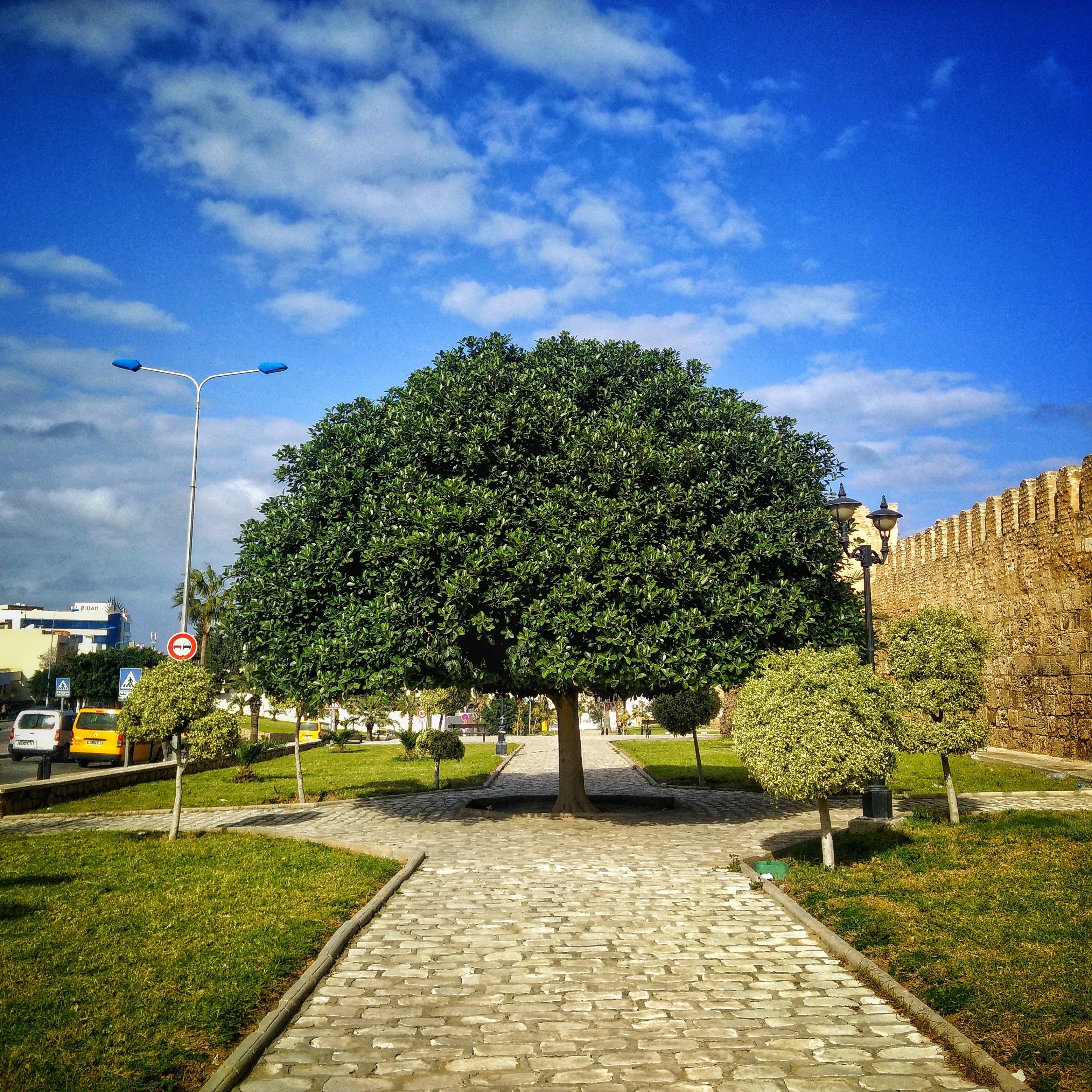 Free stock photo of #mobilechallenge, mobilechallenge, tree