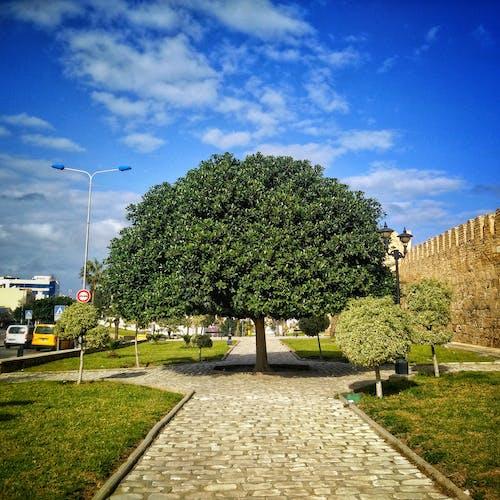 Kostnadsfri bild av #mobilechallenge, mobilutmaning, träd
