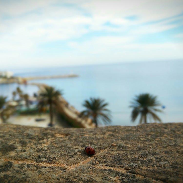 #mobilechallenge, hav, insekt