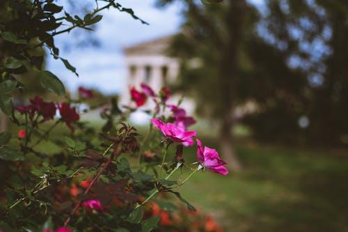 Gratis stockfoto met bloeiend, bloemen, boom, close-up