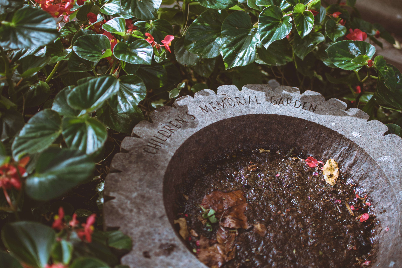 Darmowe zdjęcie z galerii z kwiaty, memoriał, ogród, rośliny