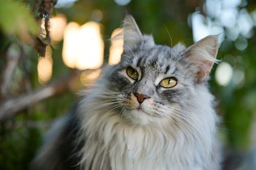 かわいらしい, ネコ, ひげの無料の写真素材