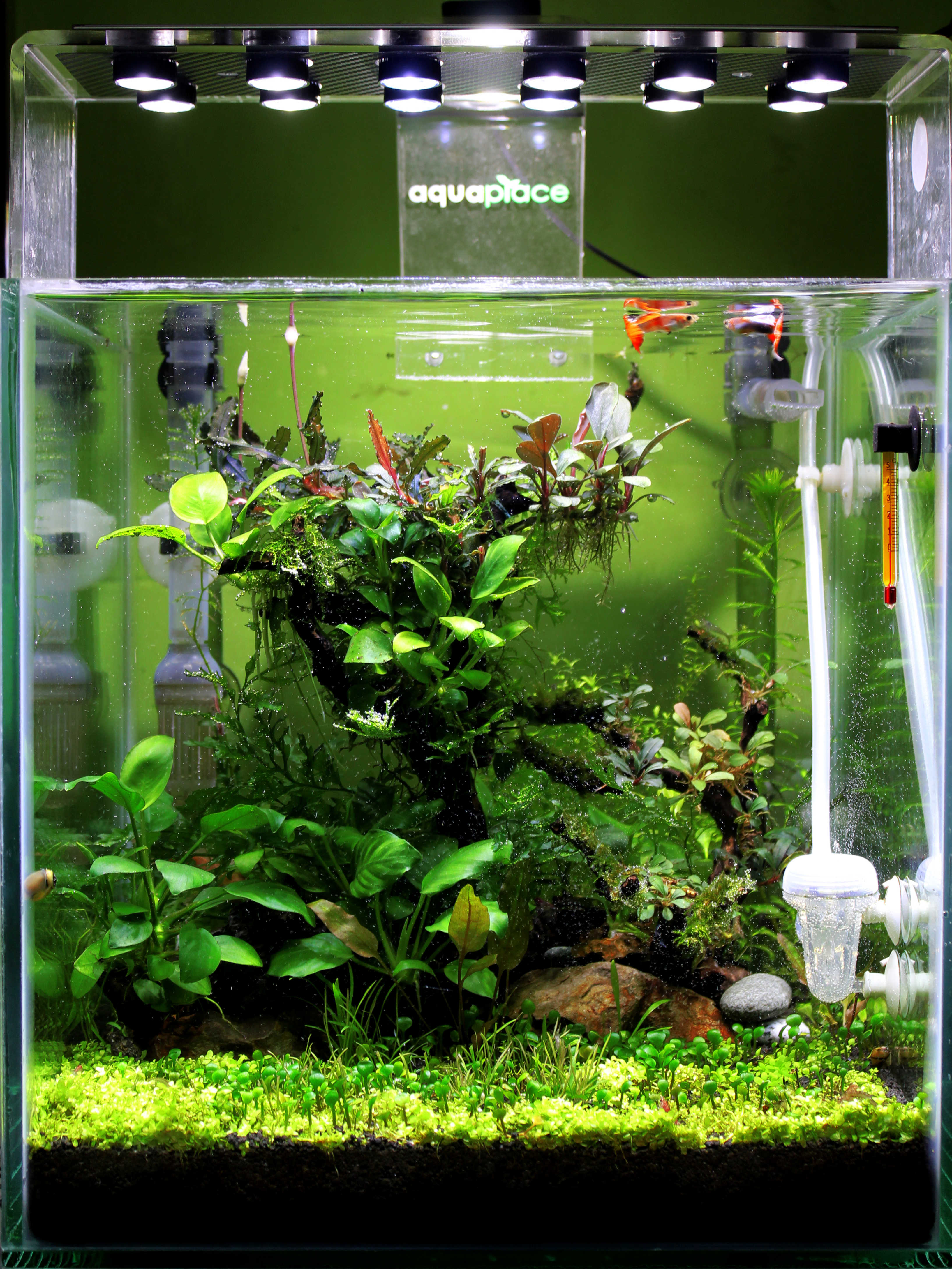 Free Stock Photo Of Aquascape