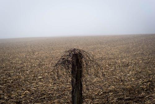 Бесплатное стоковое фото с дерево, зерновое поле, пахотная земля, поле