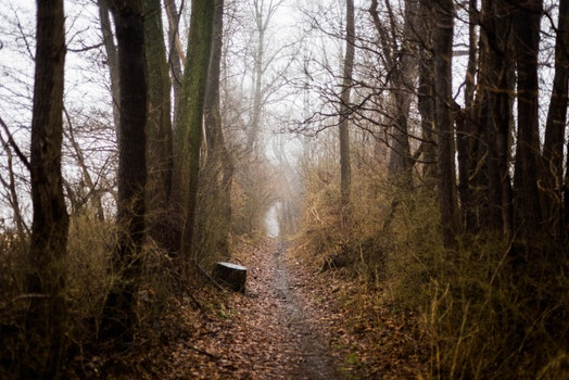 Photo of Dirt Pathway Between Trees