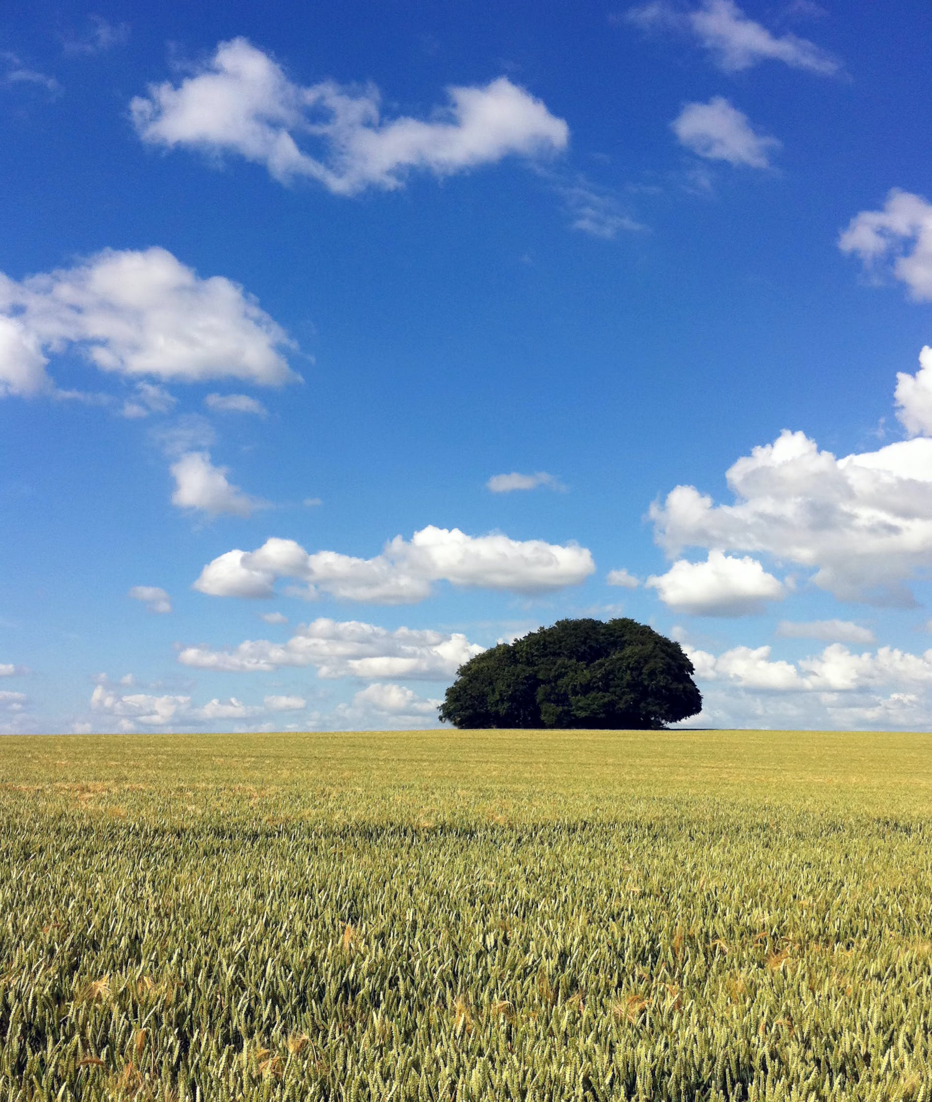 Green Leaf Tree and Grass Field Under Blue Sky and White Clouds