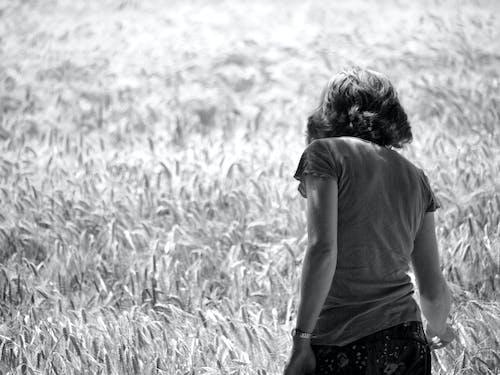 下田, 乾草地, 吸管, 夏天 的 免費圖庫相片