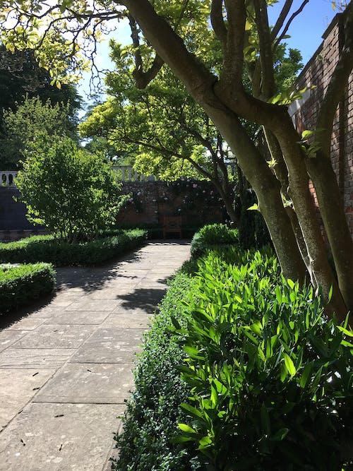Free stock photo of garden, green, walled garden