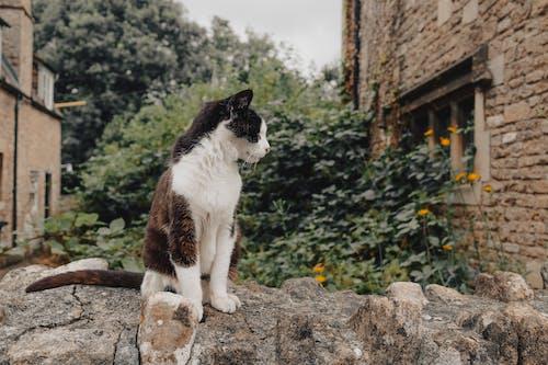 Δωρεάν στοκ φωτογραφιών με αρχιτεκτονική, Γάτα, γλυκούλι