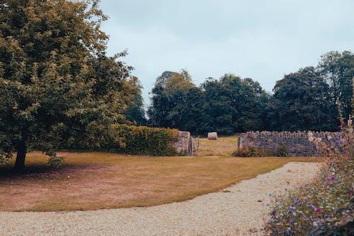 Δωρεάν στοκ φωτογραφιών με γήπεδο, γρασίδι, δέντρο