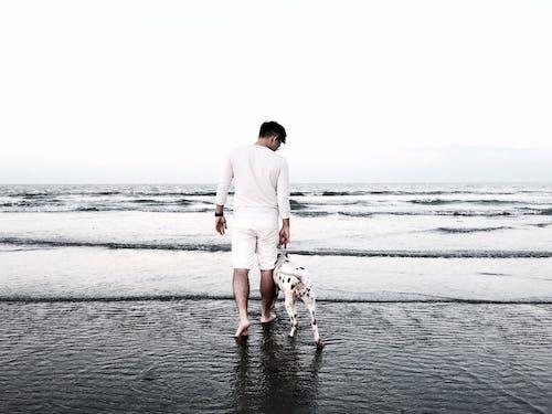 Free stock photo of beach, boy, dalmation