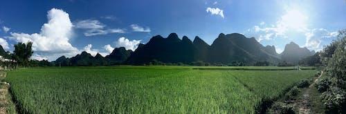 arroz, montaã±如, 中國, 坎波斯 的 免费素材照片