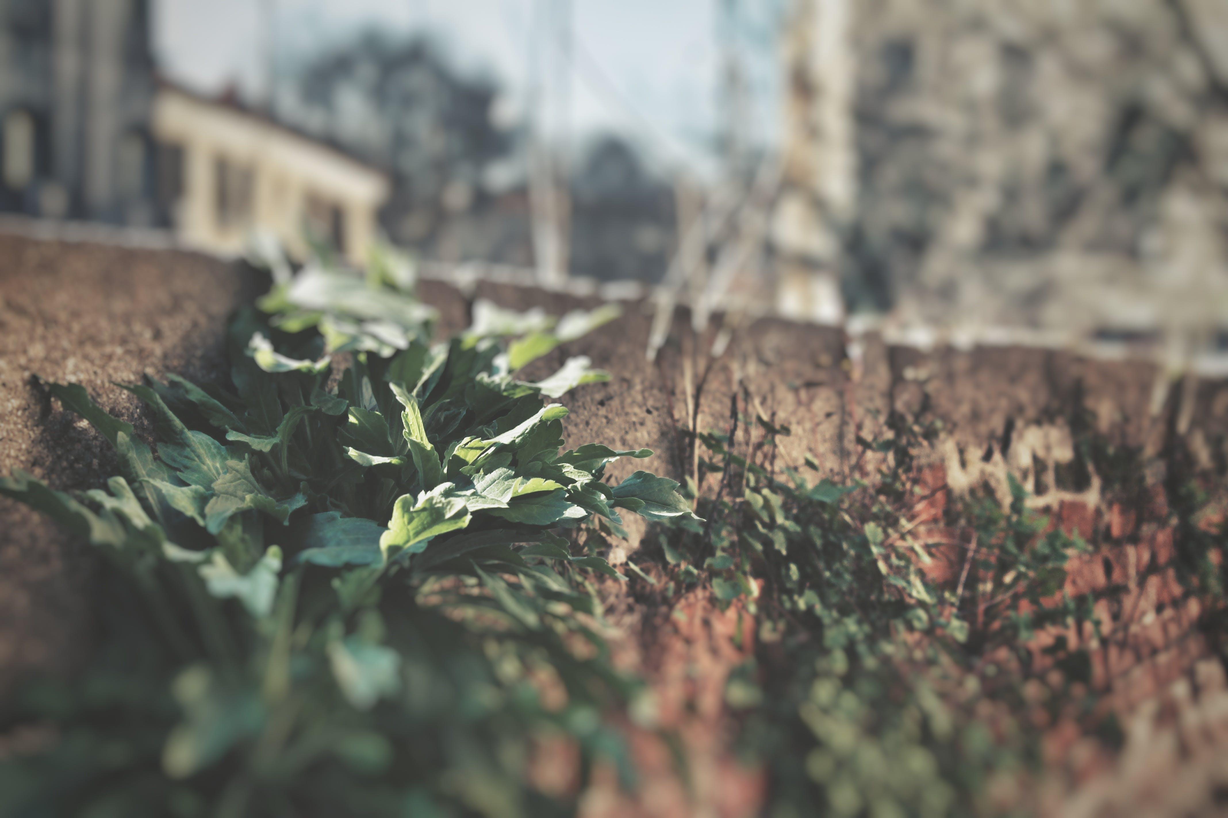 Foto stok gratis berbayang, dinding, hijau, lansekap