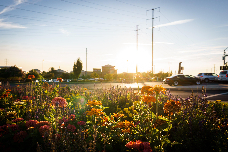 Kostenloses Stock Foto zu autoparkplatz, autos, blumen, einkaufen