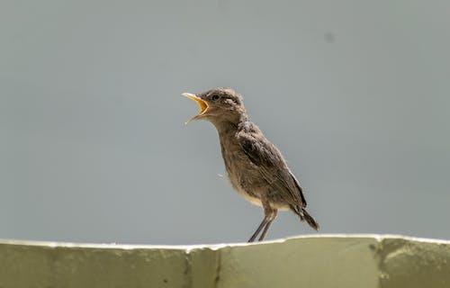 Free stock photo of animal, bird, chick