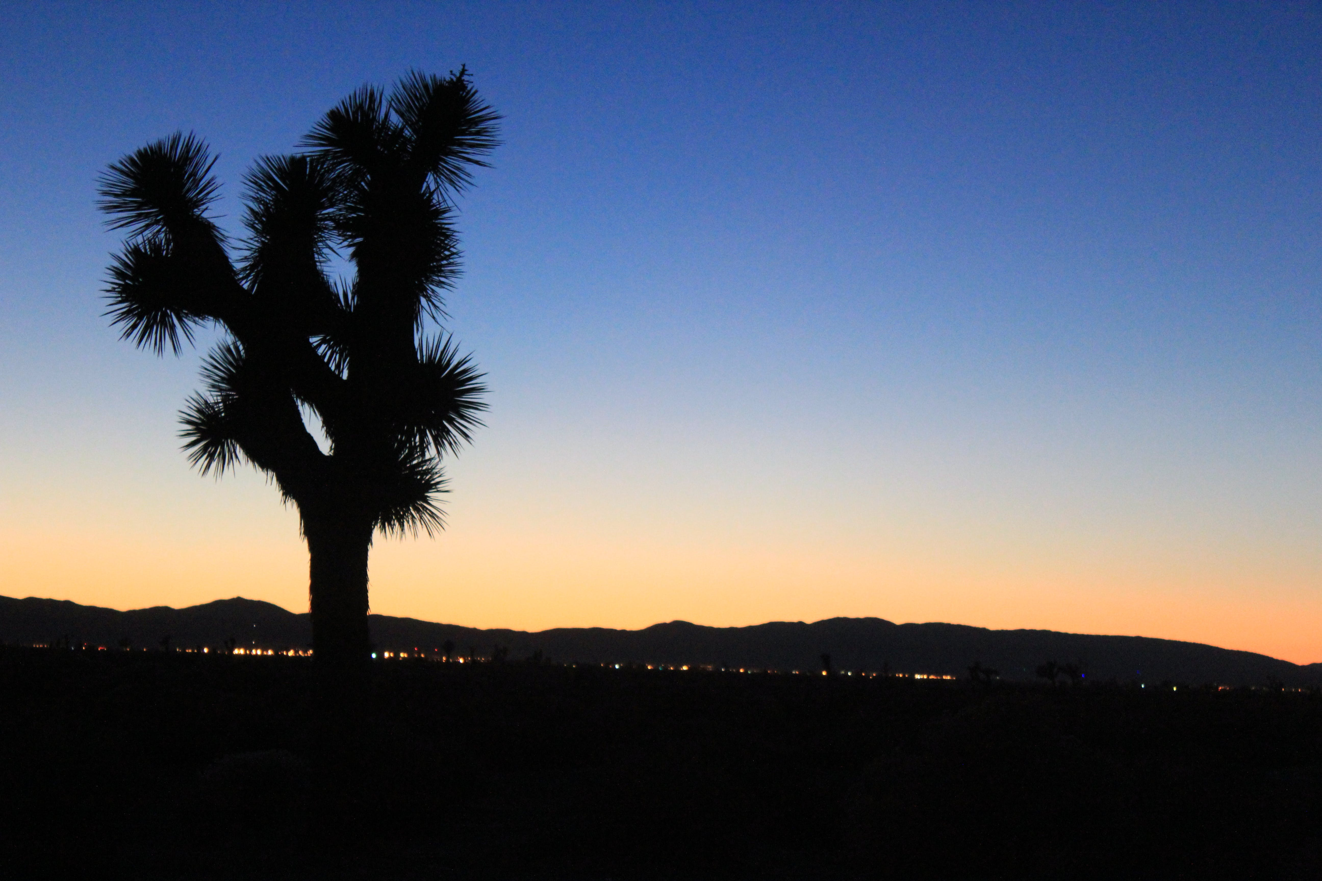 Free stock photo of joshua tree, sunset