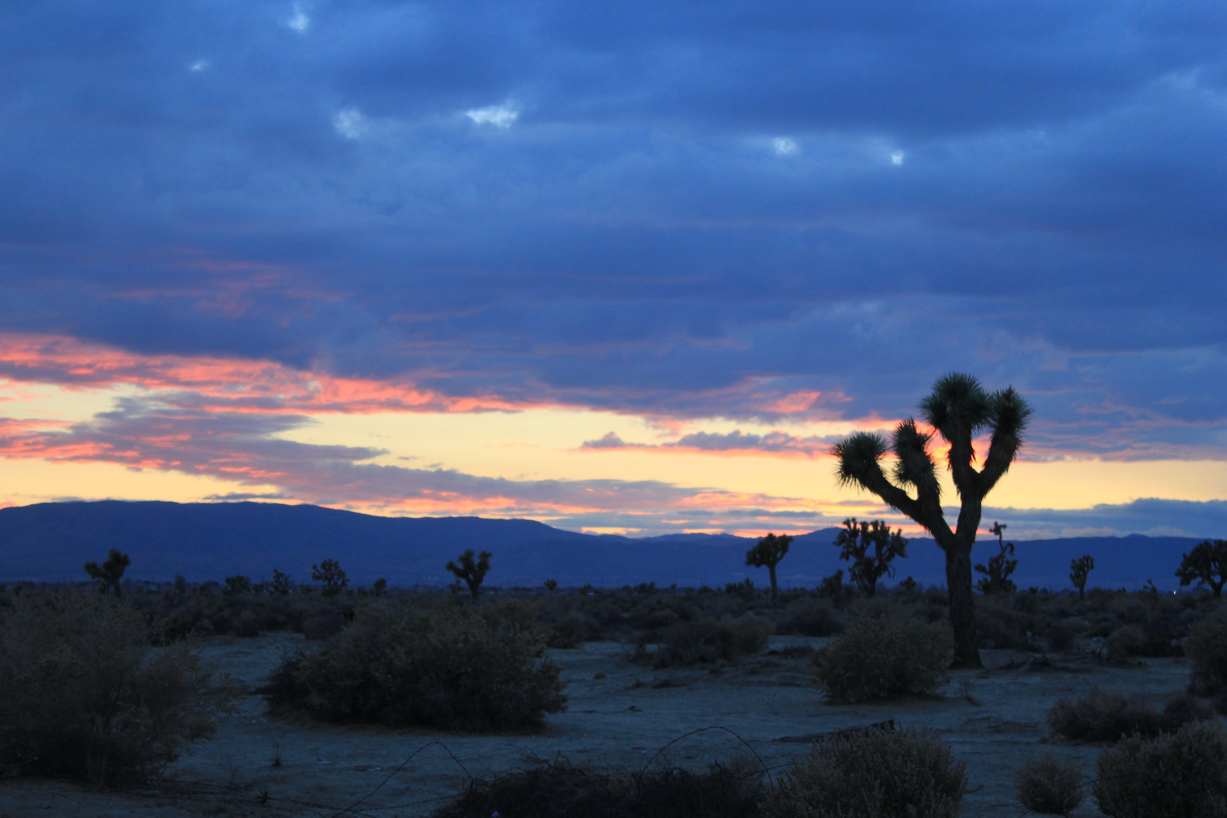 Free stock photo of sunset, joshua tree