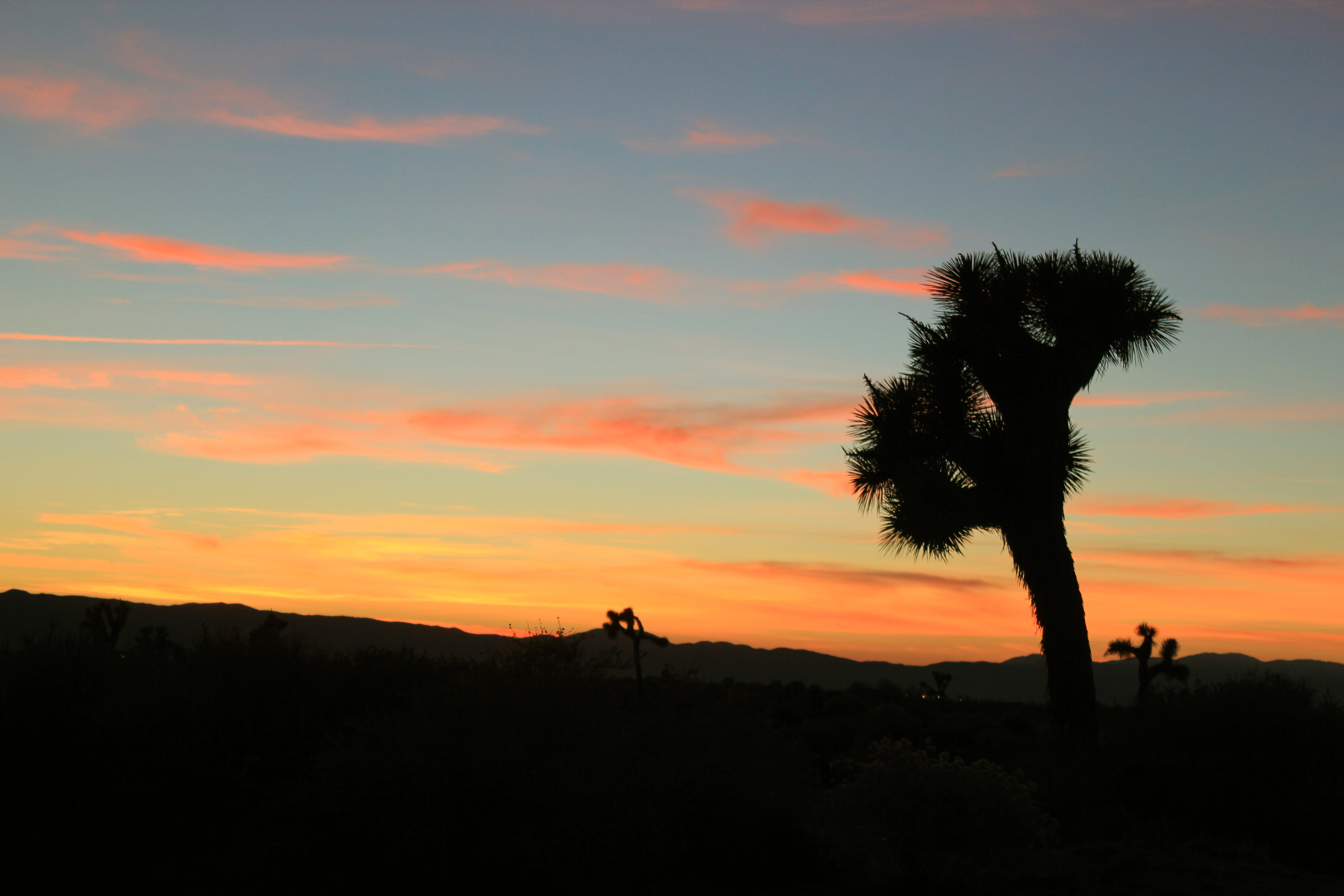 Free stock photo of sunset, joshua tree