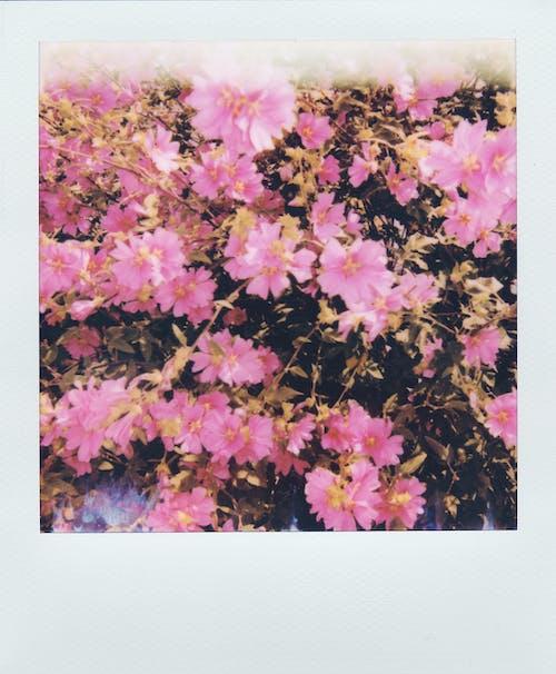Foto profissional grátis de árvore, atraente, bonito
