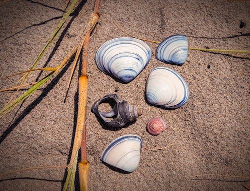 Free stock photo of beach, sand, sea shells