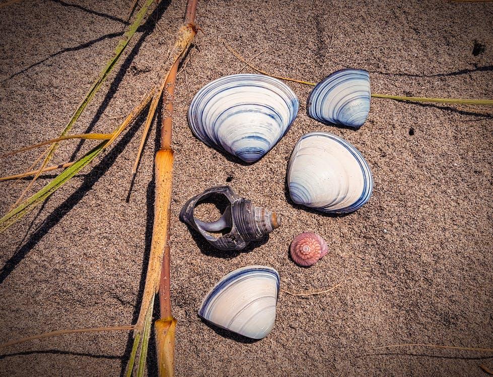 Základová fotografie zdarma na téma lastury, písek, pláž