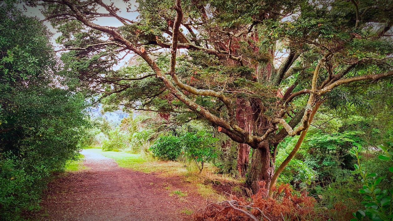 Základová fotografie zdarma na téma cesta, krajina, les