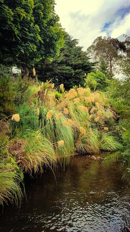 Darmowe zdjęcie z galerii z drzewa, krajobraz, las