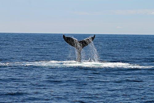 Gratis arkivbilde med dagtid, dypt hav, dyr, hale