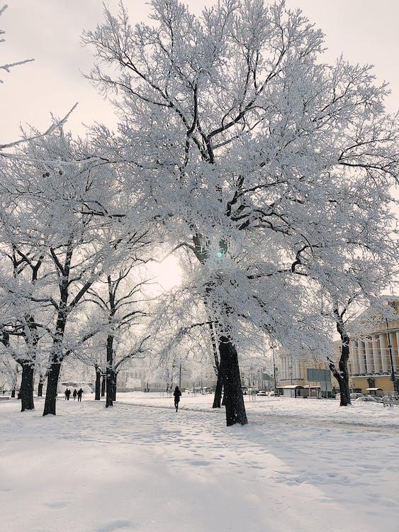 alam, badai salju, beku