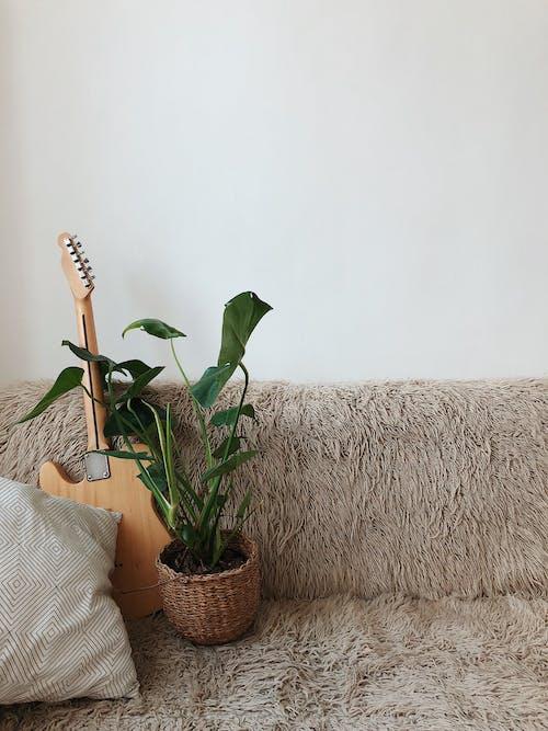 Ilmainen kuvapankkikuva tunnisteilla copyspace, istua, jousisoitin, kasvi