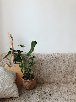 Green Leaf Plant Beside Brown Electric Guitar on Sofa