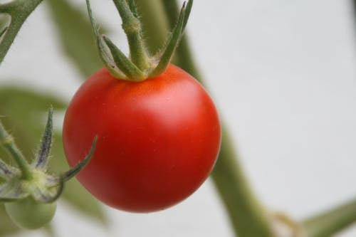 Free stock photo of food, tomato