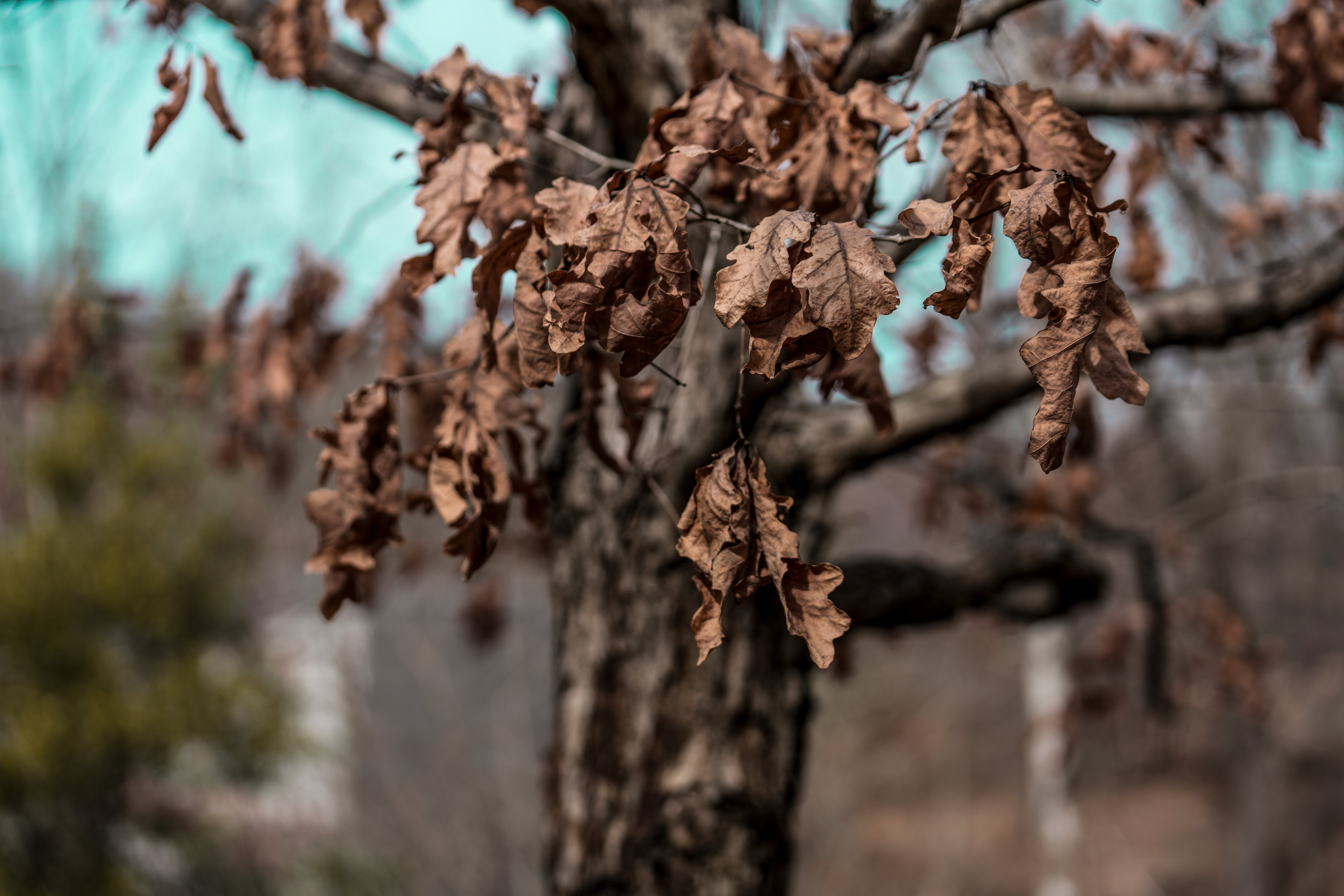Free stock photo of color, dried leaves, highres, landscape